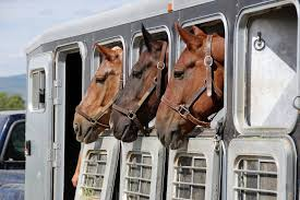 WEB BASED BUSINESS FOR HORSE TRANSPORT - 00741