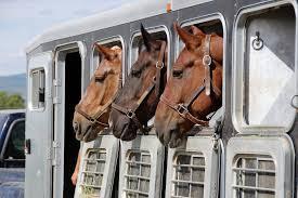WEB BASED BUSINESS FOR HORSE TRANSPORT - 00741